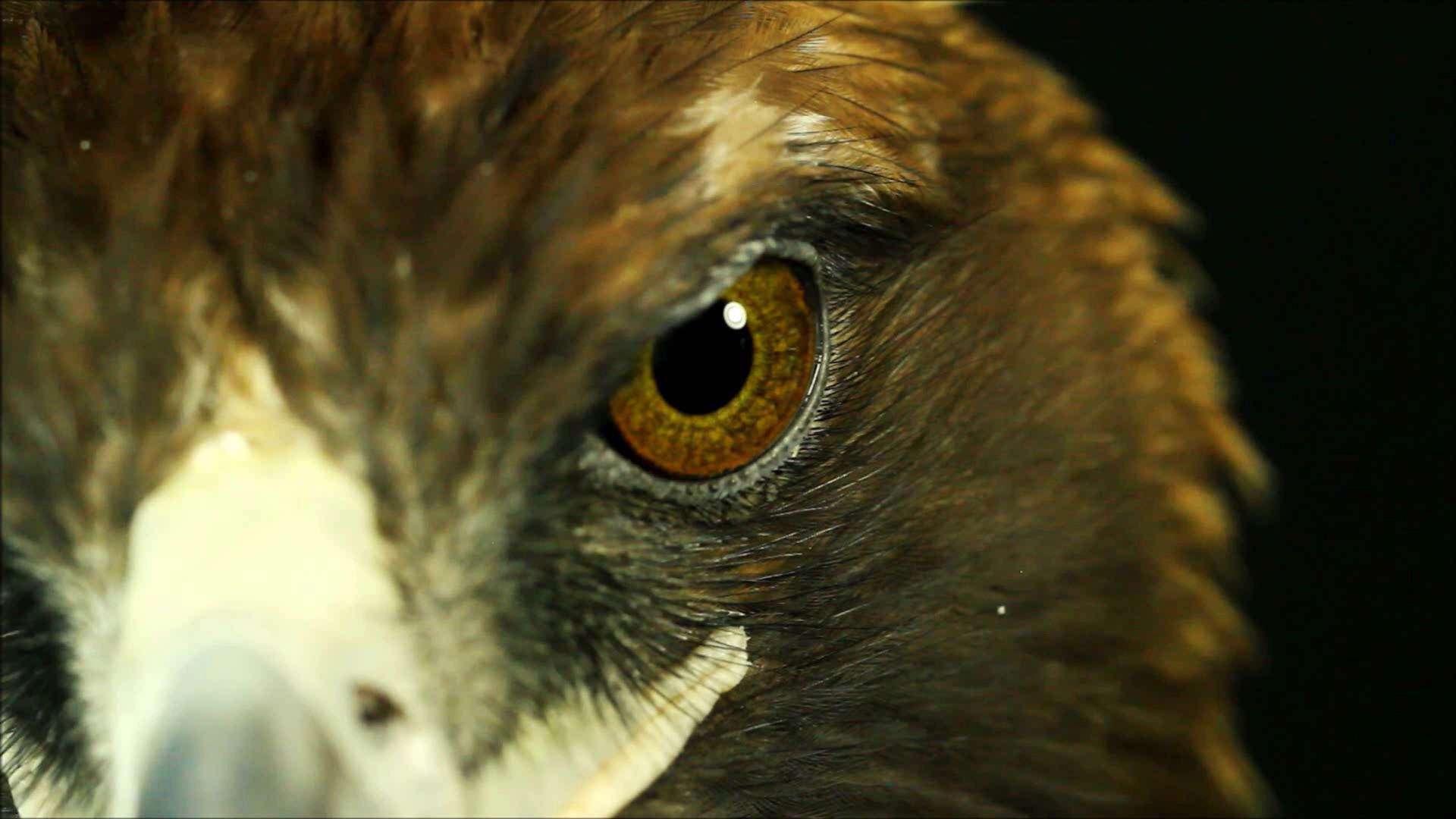 effizienta eagle